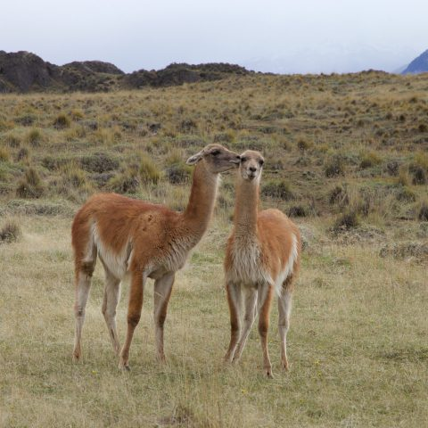Thumbnail-Patagonia-Park-1000x1000